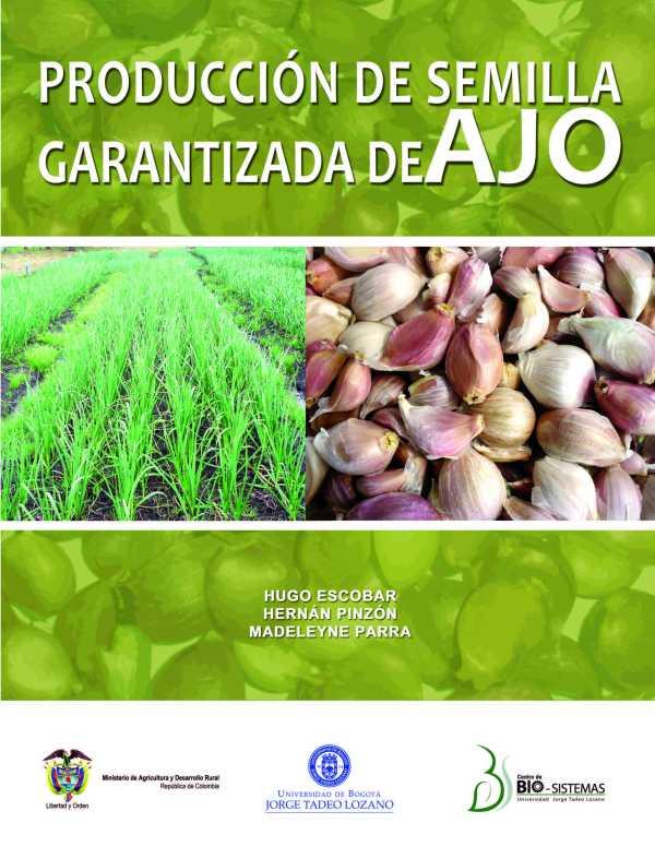 Producción de semilla garantizada de ajo