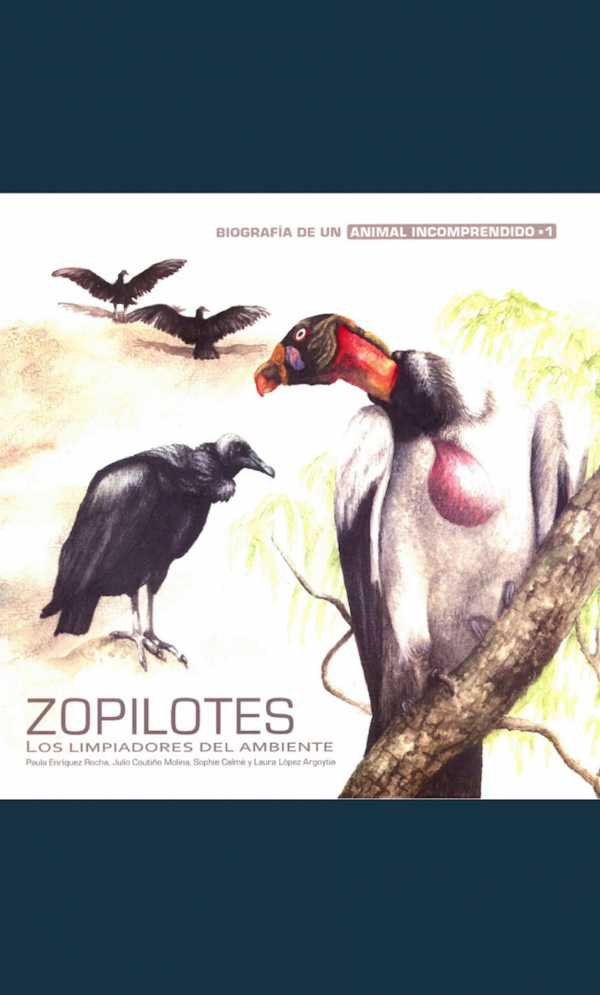 Zopilotes. Los limpiadores del ambiente